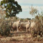 Three Rivers Saltbush Lamb at Union Dining